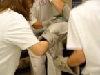 Protetika horní končetiny