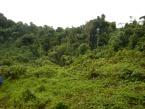 Deštný prales na Papui-Nové Guinei
