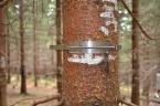 Dendrometr pro měření přírůstu kmene