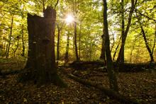 Staré stromy - Ranšpurk<br>Autor: Jan Miklín