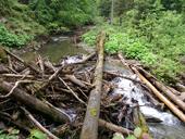 Efekt říčního dřeva na morfologii horské bystřiny (Gorcański Park Narodowy, Polsko)<br>Autor: J. Hradecký