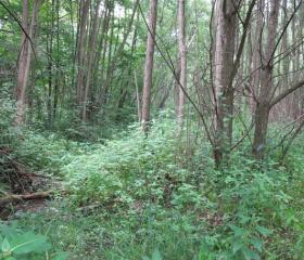 Fragment lužního lesa na Rožnovské Bečvě