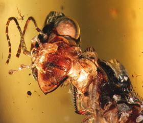 Detailní pohled na otevřený hlavo-hrudní lapací aparát Caputoraptor elegans.