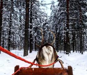 Můj rok v Estonsku