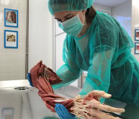 Nové plastináty umožní studentům lékařské fakulty nahlédnout do lidského těla