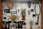 sbírky Katedry biologie a ekologie