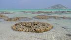 Mikroútesy v laguně při extrémním odlivu