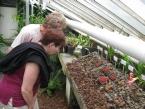 Expozice trpasličích australských rosnatek