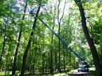 Entomologové odhalují tajemství hmyzu v korunách stromů