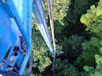 Entomologové odhalují tajemství hmyzu v korunách stromů (2/3)