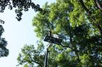 Unikátní metodika sběru hmyzu v korunách stromů pomocí vysokozdvižných plošin. Foto: Katedra biologie a ekologie Přírodovědecké fakulty OU.