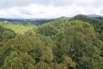 Dopterokarpový prales v NP Ulu Temburong