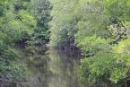 Mangrové v rezervaci Selirong - Brunej