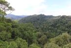 Tropický deštný les v NP Ulu Temburong