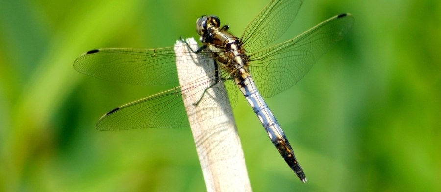 New mobile app: Dragonfly Hunter