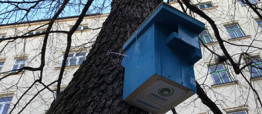 Our biologists criss-crossed the city with a network of birdhouses